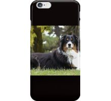 Australian Shepherd Tri Color iPhone Case/Skin