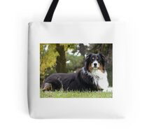 Australian Shepherd Tri Color Tote Bag