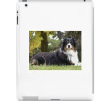 Australian Shepherd Tri Color iPad Case/Skin