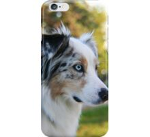 Australian Shepherd Blue Merle iPhone Case/Skin