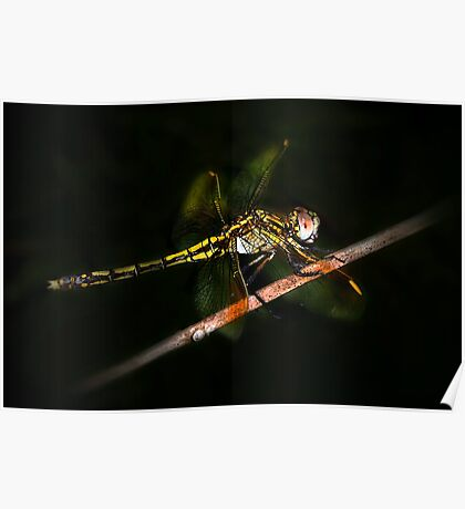 Nocturnal Dragonfly Poster