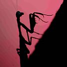 """IN SILHOUETTE - """"THE PRAYING MANTIS"""" by Magaret Meintjes"""