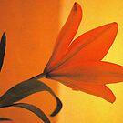 THE LILIUM - Liliaceae by Magriet Meintjes