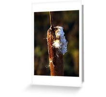 FROZEN DEW DROPS Greeting Card