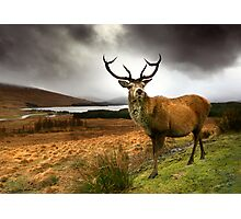 Monarch of the Glen Photographic Print
