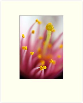 Stamen by Bobby McLeod