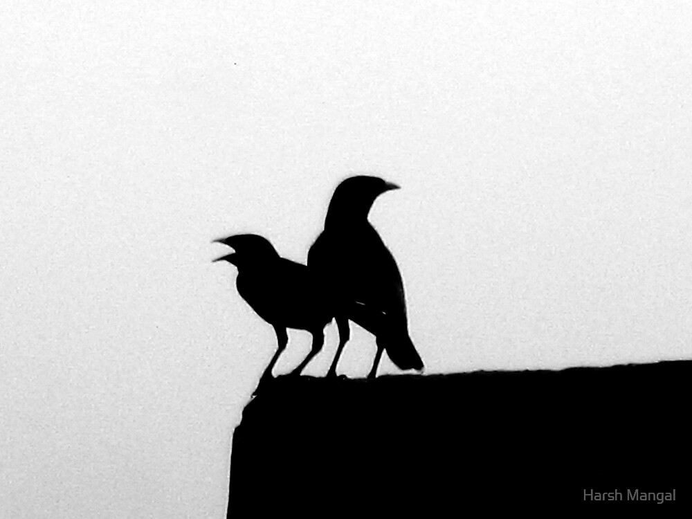 Shouting On The Edge by Harsh Mangal