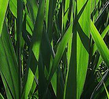 Reed Blades by RVogler