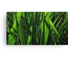 Reed Blades Canvas Print