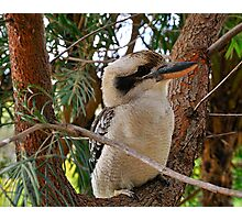 Just Call Me Fluffy - Kookaburra, Sydney Australia Photographic Print