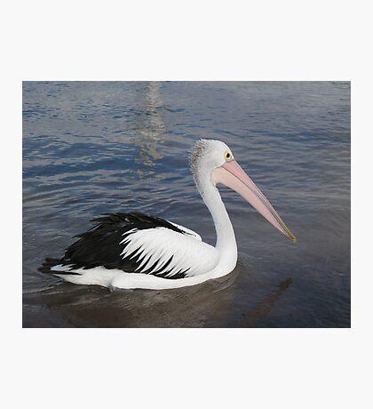 Hello Pelican - Rottnest  Island 3 Photographic Print