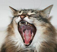 Hear Me Roar by Stephen Mitchell