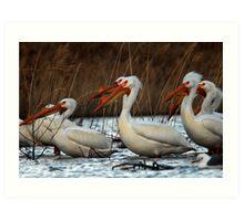 Pelicans - Saratoga Springs, Utah Art Print