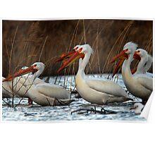 Pelicans - Saratoga Springs, Utah Poster