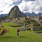 The Llamas of Machu Picchu by Krys Bailey
