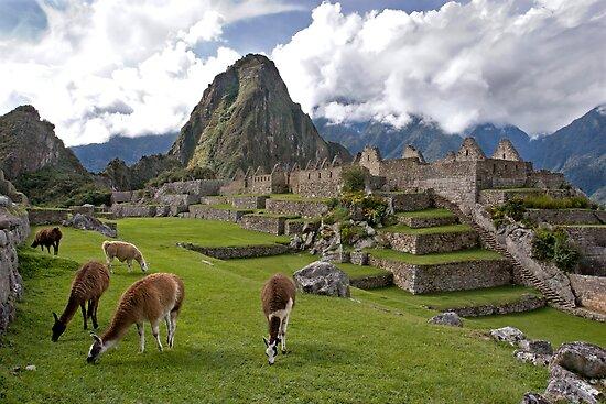 The Llamas of Machu Picchu by Krys Bailey
