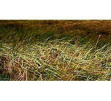 Sea Grass Photographic Print