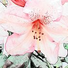 Beautiful pink azalea flower. digital photo art. by naturematters
