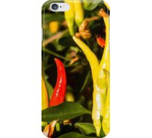 Ornamental Chili Close-Up iPhone Case/Skin