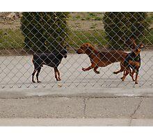 Levitating Hotdog Photographic Print