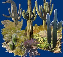 Saguaros of ARIZONA by DAdeSimone