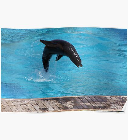 Jumping Sealion Poster