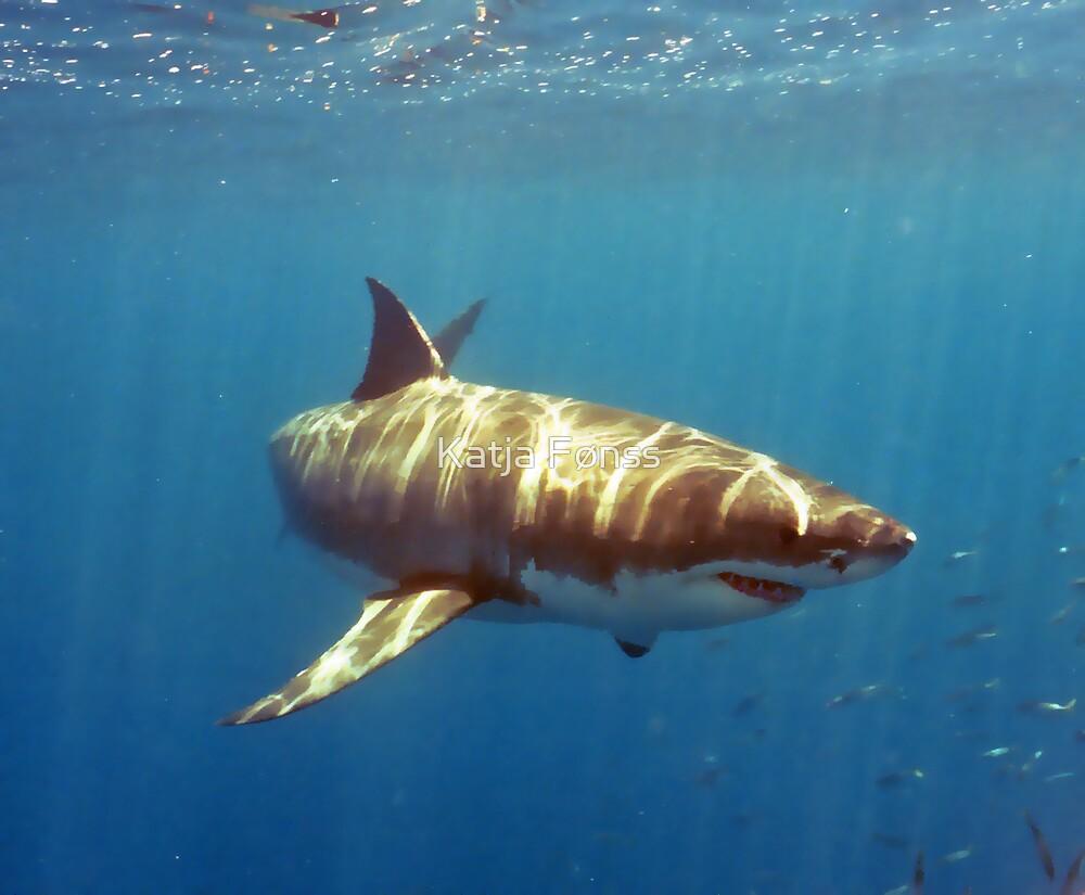 Another Great White Shark! by Katja Fønss