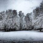 Moody snow trees by Lynette Dobson