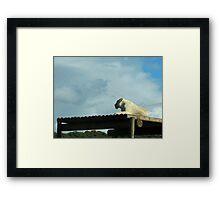 New Horizons: White Lioness Framed Print