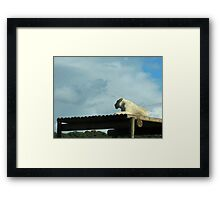 New Horizons: White Lioness Framed Print