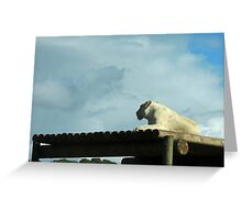 New Horizons: White Lioness Greeting Card