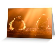 Early birds... Greeting Card