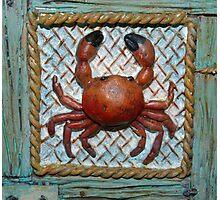 Feeling Crabby Photographic Print