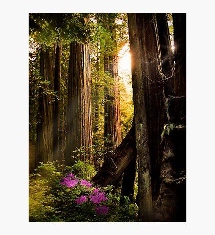 Among the Giants Photographic Print