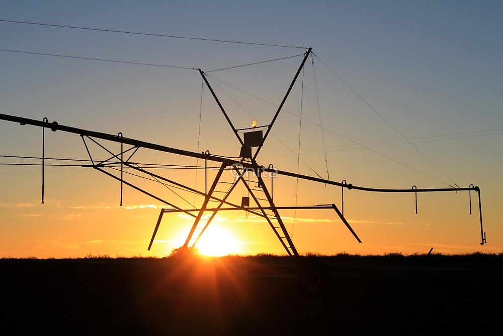Pivot / Sprinkler silhouette at sunset by Qnita