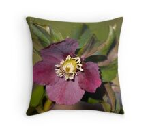 Helleborus Throw Pillow