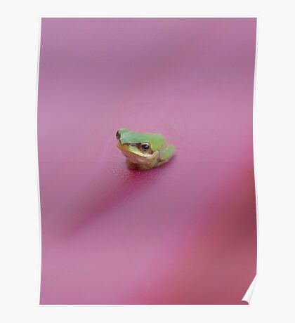 FROG Poster