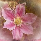 Pink Delicacy by Elaine Teague