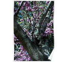 The Atmosphere Surrounds a Tree Poster