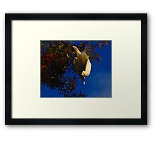 Cockatoo... Framed Print