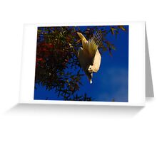 Cockatoo... Greeting Card