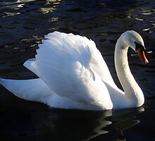 Swan Display by Linda More