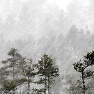 26.12.2014: Blizzard I by Petri Volanen