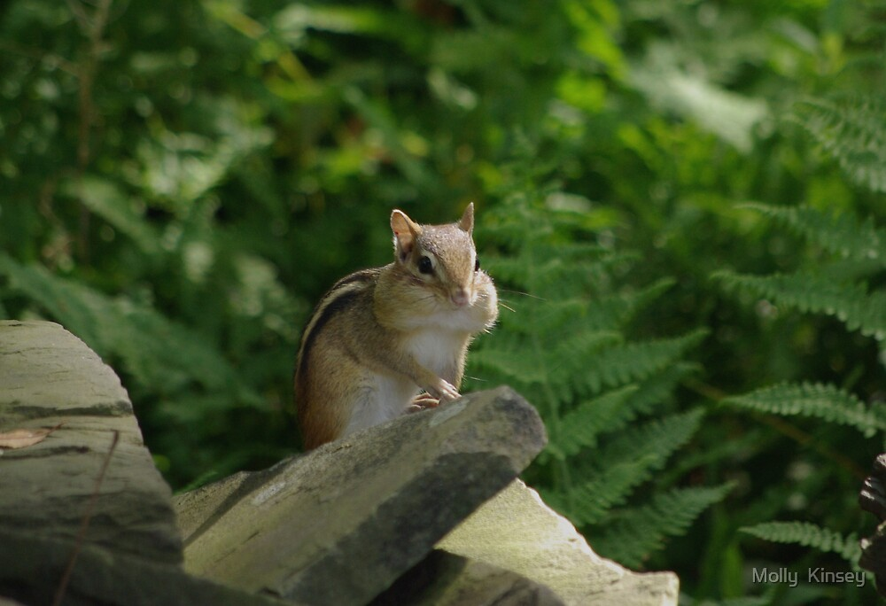 Chipmunk Cheeks by Molly  Kinsey