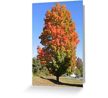 A tree in New England Greeting Card
