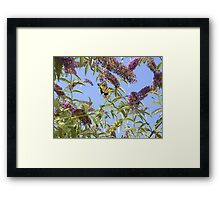 butter flys Framed Print