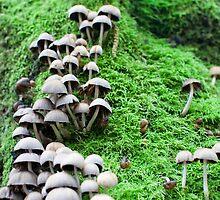 Mushroom on Moss Muir Woods 2007 by Alan LeClair