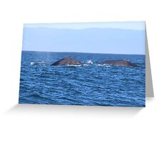 Two Grey Whales Greeting Card