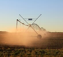 On a farm in Orania, Northern Cape, South Africa. Irrigation by Qnita