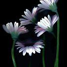 The Year In Flowers by Nancy Polanski
